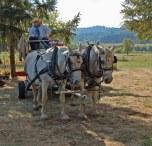 JBrown&Wagon